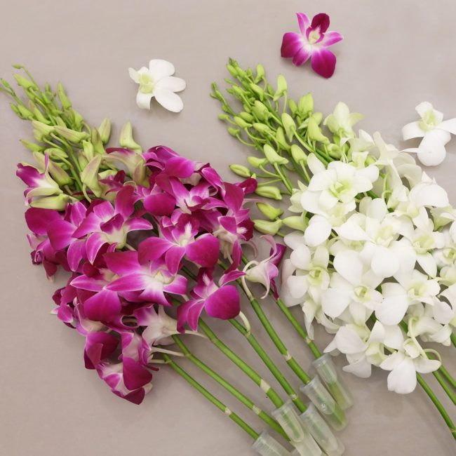 Interesting facts about orchid flowers